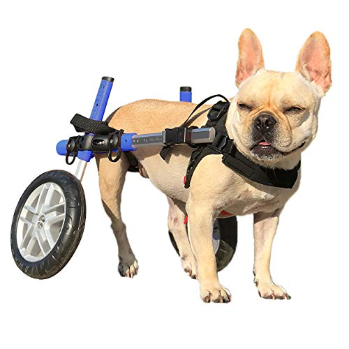 Walkin' Wheels Dog Wheelchair - for Small Dogs 11-25 Pounds - Veterinarian...