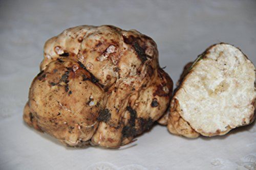 Seeds Truffle White Mushrooms Spores Spawn Substrate Mycelium for Planting...