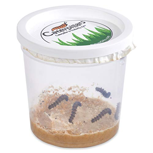 Nature Gift Store 5 Live Caterpillars Shipped Now- Butterfly Kit Refill...