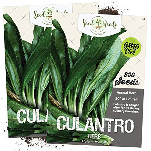 Seed Needs, Culantro Seeds for Planting (Eryngium foetidum) Twin Pack of...