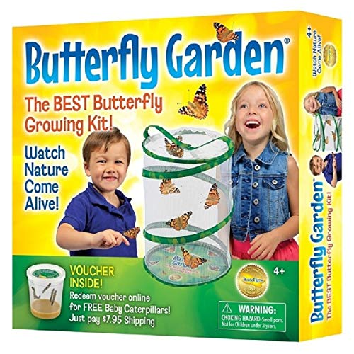 Insect Lore - Butterfly Growing Kit - With Voucher to Redeem Caterpillars...