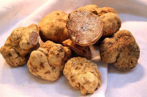 10 Gr dry any Seeds infected of Spores Truffle White Garden Mushrooms...
